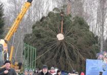 Главную новогоднюю ель страны выбрали с помощью иглы