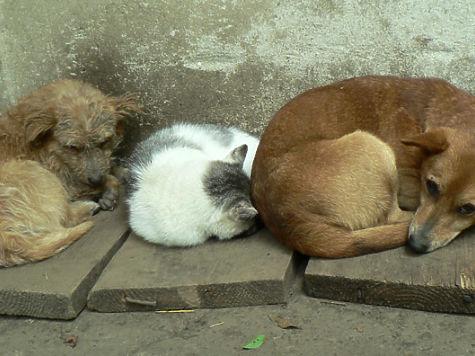 Наотлов бездомных животных вНижнем Новгороде истратят 15 млн. руб.