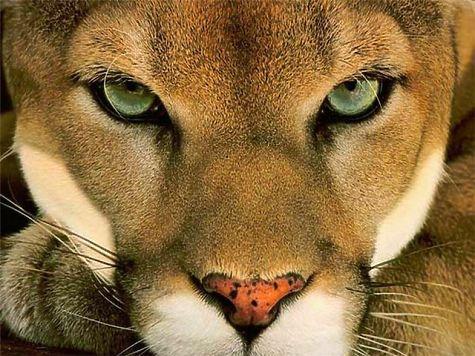 Внижегородском зоопарке львица искусала мужчину, забравшегося ввольер