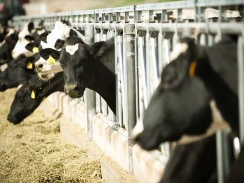 Центр попроизводству ипереработке козьего молока появится вНижегородской области