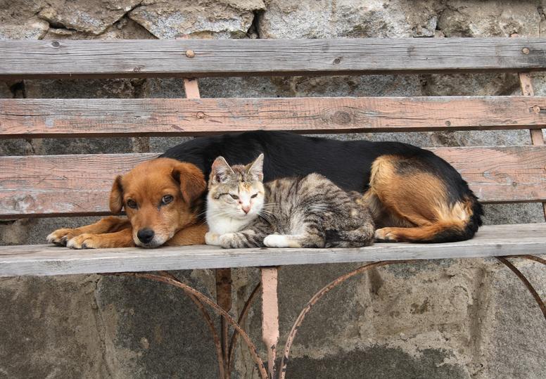 Народные избранники Нижегородской области позаботятся обездомных животных
