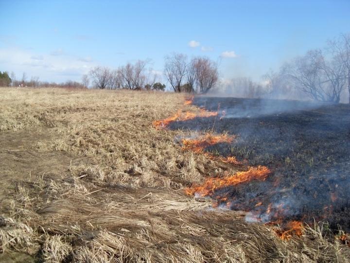 16 загораний травы зафиксировано вНижегородской области засутки