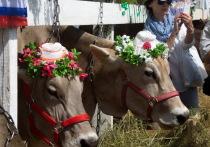 Конкурс красоты коров прошел в Нижегородской области