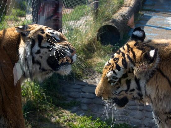 Зоопарк «Лимпопо» отпраздновал день рождения