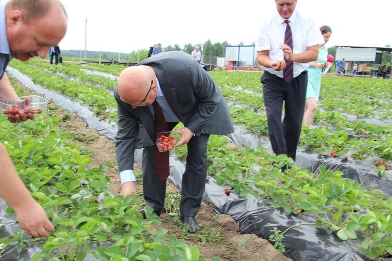 ВНижегородской области будет сосредоточена десятая часть русского производства ягод