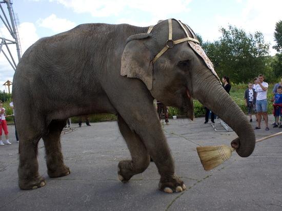 Слон-волонтер убирал набережную Гребного канала в Нижнем Новгороде