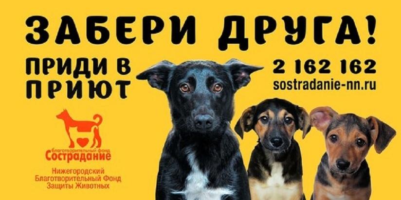Администрация Нижнего Новгорода объявила открытый конкурс социальной рекламы