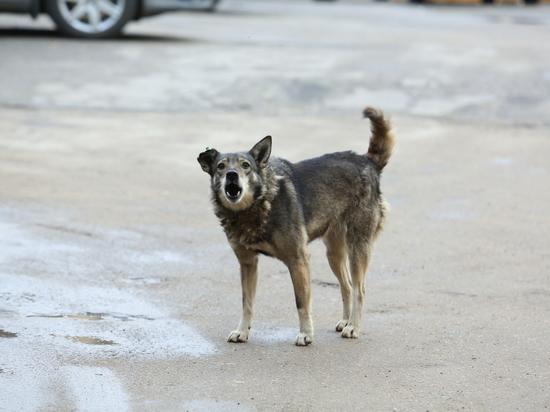 Нижегородка отсудила компенсацию за укус собаки