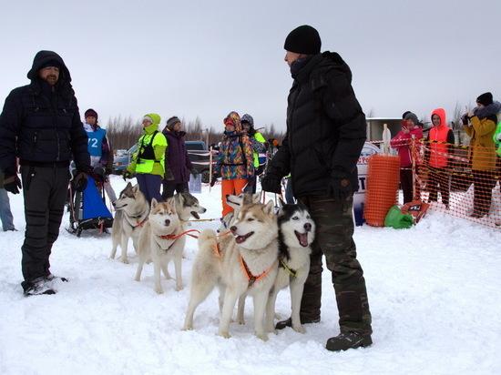 Чемпионат России по гонкам на собаках прошел в Нижегородской области