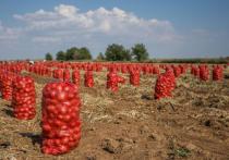Астраханские фермеры живут одним днем